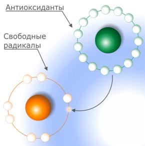 antioksidanti_max